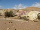 torrente nel deserto del Negev